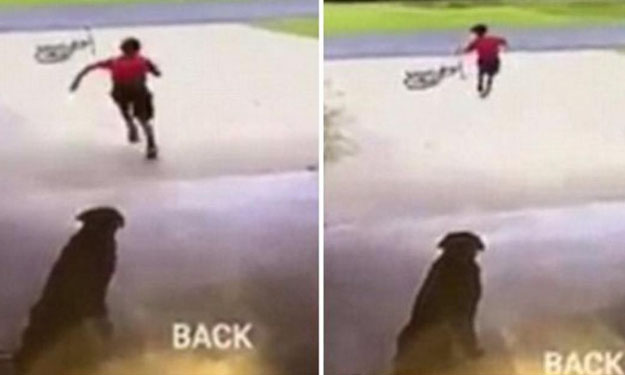 Woman solves mystery of who's been sneaking into her home -- to hug her dog