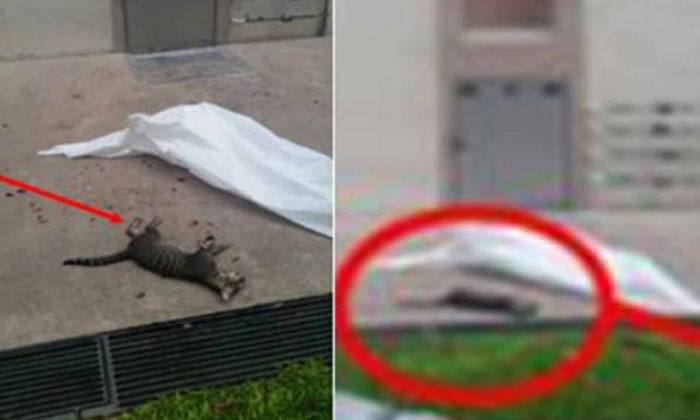 Another cat dies after being hurled from Redhill block: It had a broken leg and shattered mouth