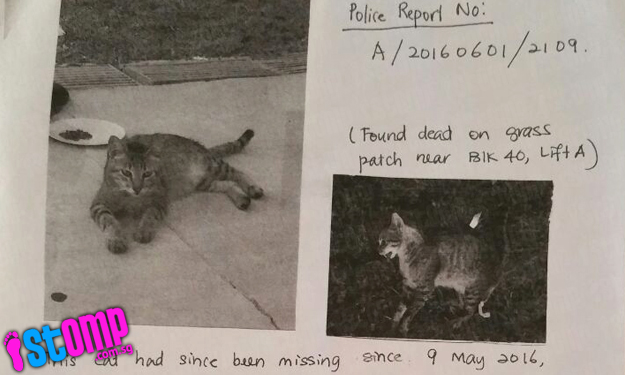 Cat missing for almost a month found dead with blood in its mouth at Telok Blangah Rise