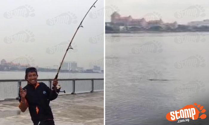 Guy reels in fishing line with all his might -- to catch 3-metre crocodile at Woodlands Waterfront