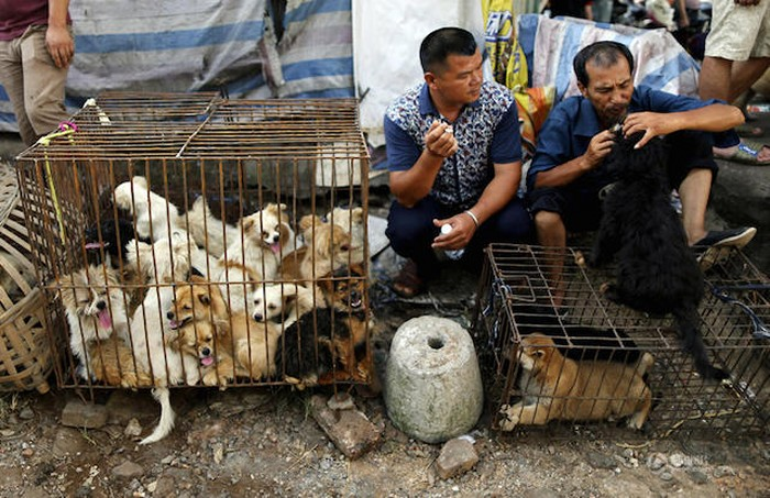 Poll says majority of Chinese oppose dog-eating festival and have never had dog meat