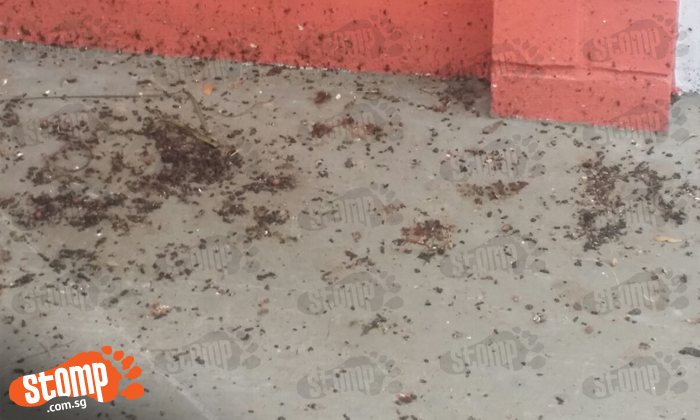 Choa Chu Kang resident plagued by animal droppings at Block 531 void deck