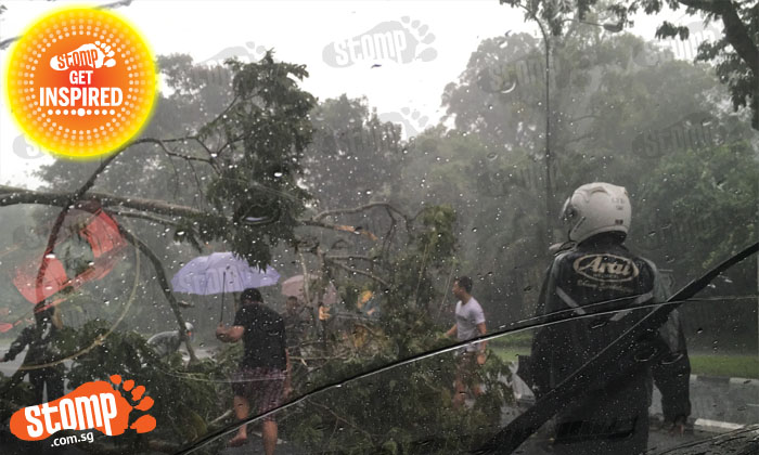 Fallen tree blocking road no problem for these kind-hearted drivers