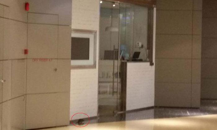 Marina Bay Link Mall gets NEA checks for rat problem