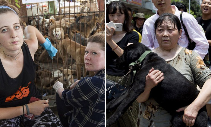 'Angels of Yulin' help to save 1,000 from dog-eating festival