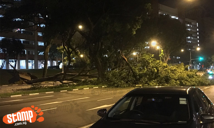 Large tree falls and blocks the road along Jurong West Ave 4