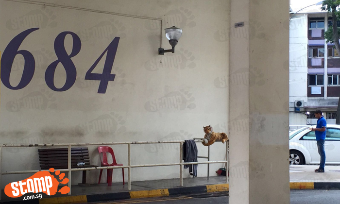 Do you see anything out of the ordinary in this photo taken at Hougang Avenue 8?