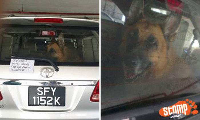 Toyota driver locks dog inside car to buy soap at The Verge -- then calls Stomper 'stupid' and 'ridiculous' after being confronted