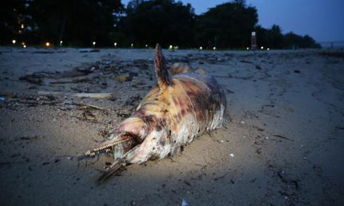 Carcass of dolphin washes up on East Coast Park beach