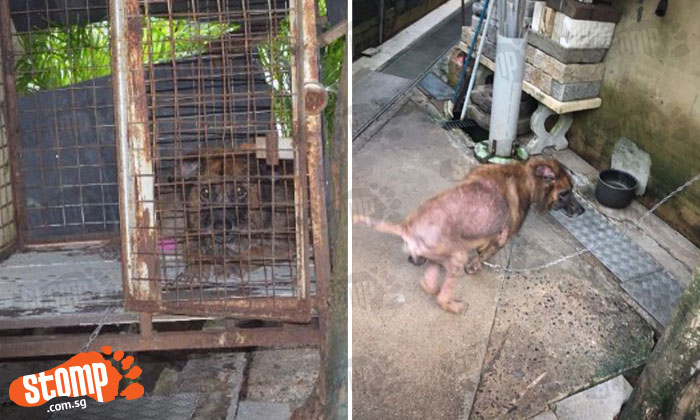 What kind of owner will do this? Dog left chained to wall and kept in rusty cage outside shop at Figaro Street