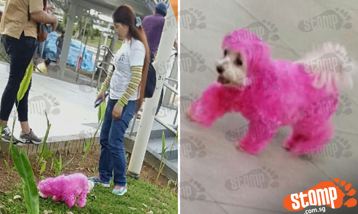 OMG! What has this couple done to their Maltese?