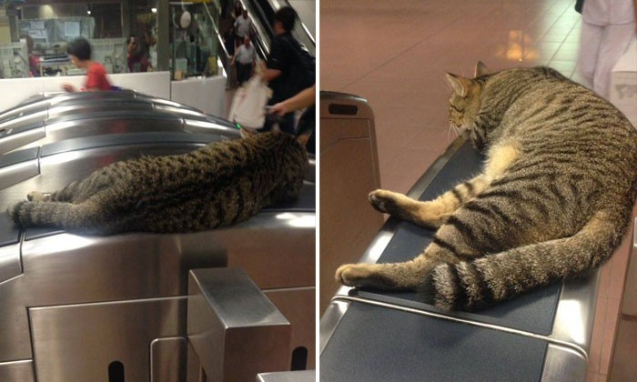Thug life: Cat hangs out at MRT station gantry like a boss
