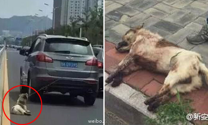 Man in China gets beaten up for killing dog by dragging it behind his moving car