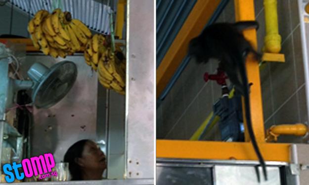 Monkey raids Changi Village stall for bananas