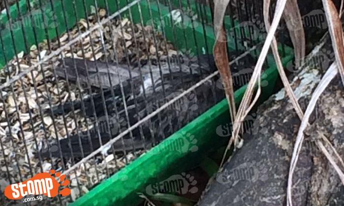 Dead bird found in cage at Ang Mo Kio Block 608