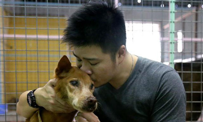 Doctor gives up 5-figure salary to save street dogs