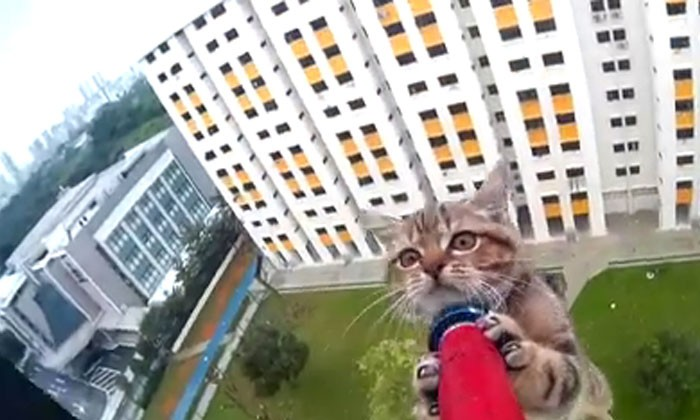 A real scaredy-cat rescued from 12th storey ledge in heart-stopping video