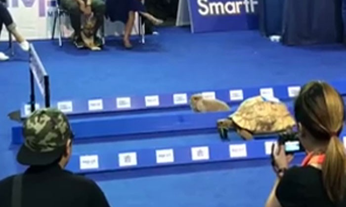 Rabbit and tortoise in a race -- who will win this time?