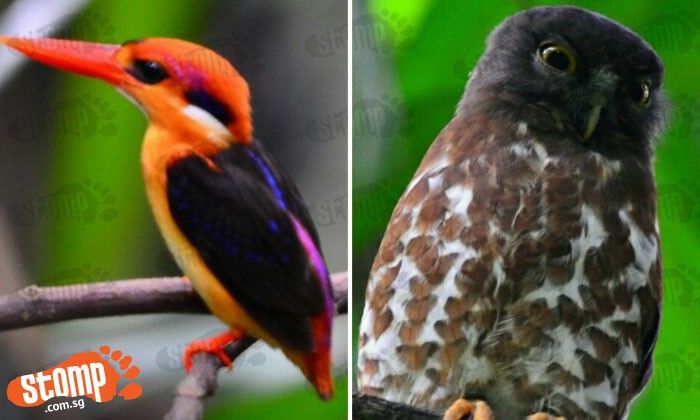 Beautiful Kingfisher and 2 owls living in serenity might just make your day