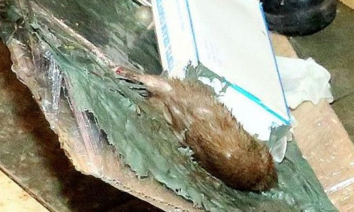 20 rats caught within one hour in Jurong West Market