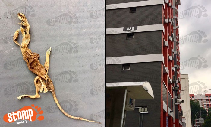 Which animal do these remains at Hougang Ave 8 BLK 436 belong to?