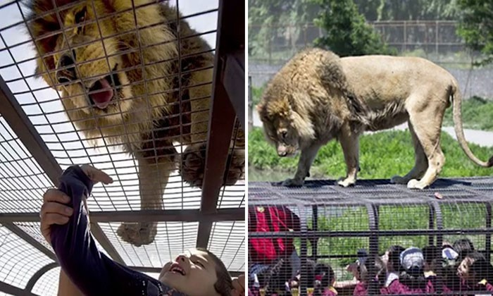 Humans are caged in Chile's zoo while animals roam free -- and it definitely gives a new perspective