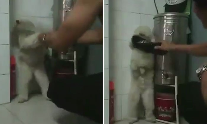 Man hits adorable dog with slipper multiple times -- while dog stands in a corner, looking frightened