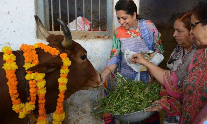88 million cows and buffaloes in India to be issued identity cards