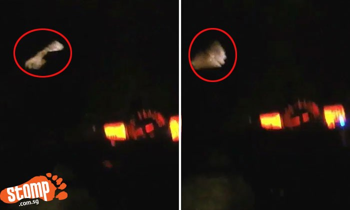 You won't believe what biker hit while riding on dark road in the middle of the night