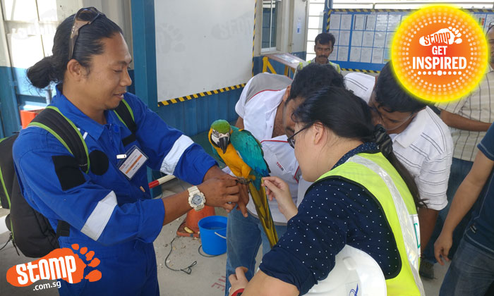 The macaw's owner (in blue) was delighted to be reunited with his beloved pet.