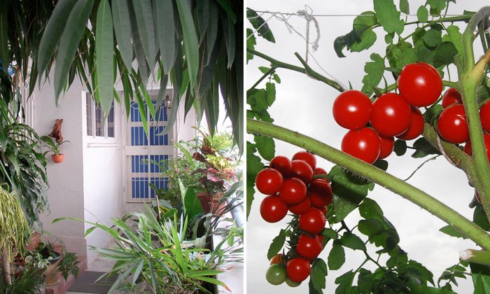 flourishing garden. Here\u0027s How You Can Transform Your HDB Corridor Into A Flourishing Garden D