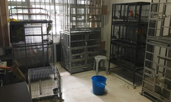 27 caged birds were found in a Jurong West flat operating as an illegal pet shop. Photo: AVA