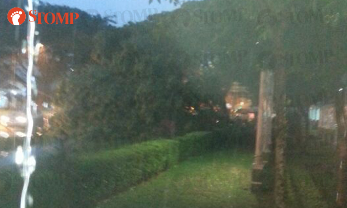 Fallen tree near Geylang Polyclinic, resulting in a traffic jam