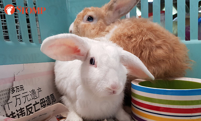 Two rabbits that were rescued at Admiralty Park
