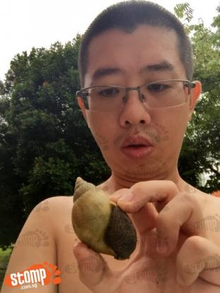 'Freakish' snail in Bishan is nothing like the brown ones you usually see