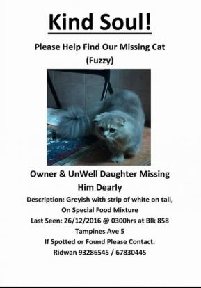 Has anyone seen 'Fuzzy' around? His owner and unwell daughter miss him very much