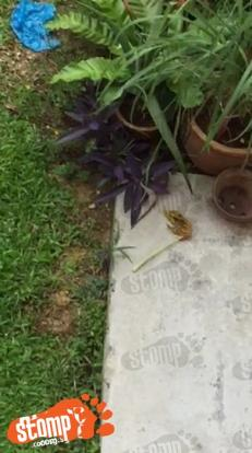 Photo: Video Screengrab