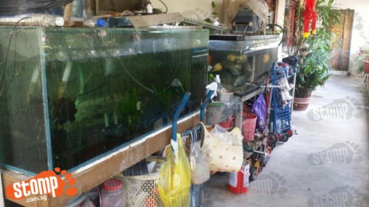 Bicycles dirty fish tanks pails potted plants and more for Dirty fish tank