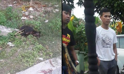 animal cruelty in malaysia