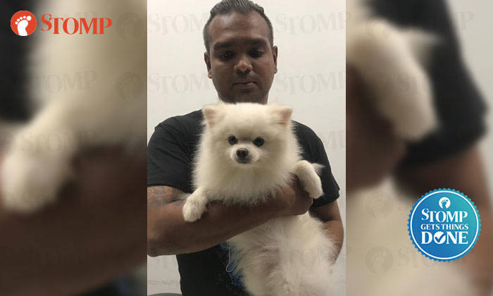 Sniffy being held by an SPCA staffer.