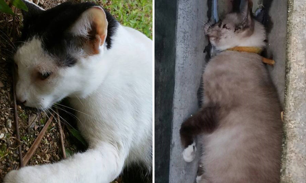 Cat deaths in Yishun continue despite 2 arrests: Join Stomp on the prowl for the latest updates