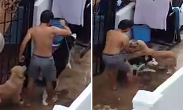 What a jerk! Man violently punches, kicks and lifts dog by its neck on a leash at Loyang Green residence