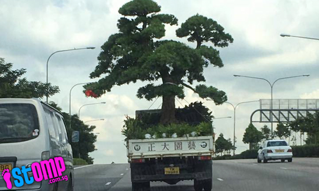 LOL: How often do you see an entire tree being transported on SLE like that?