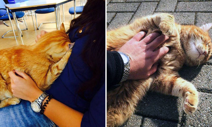 This cat comes to university every day to get pats from students