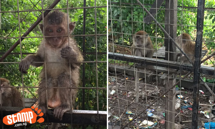 Stomper heartbroken by sight of caged and chained monkeys at cable-ski park in Batam