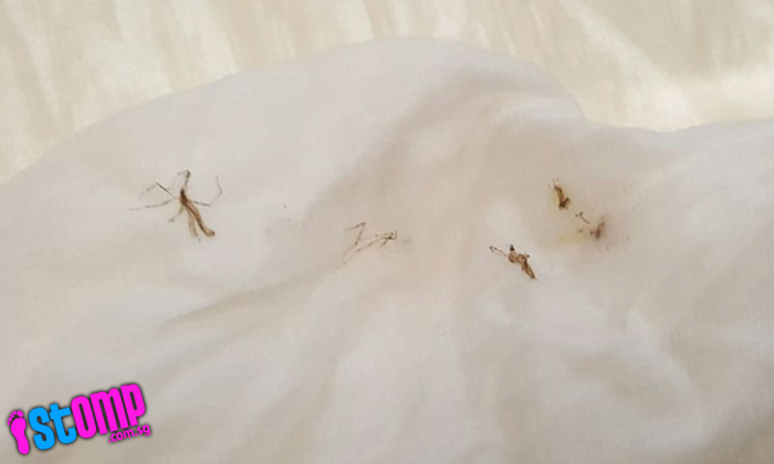 'Swarm' of mosquitoes freak out residents of Keat Hong Pride