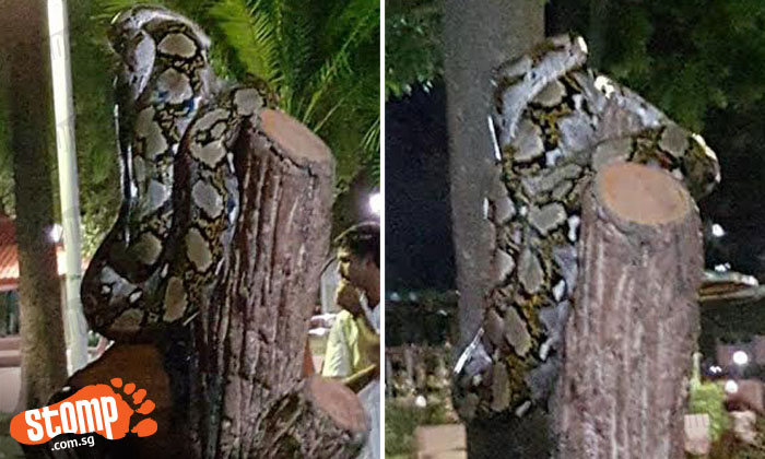 Sign designed to look like tree attracts unusual visitor at Teban Gardens Park