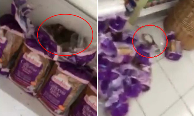 Rat has feast at Hougang FairPrice, but supervisor 'can't be bothered'