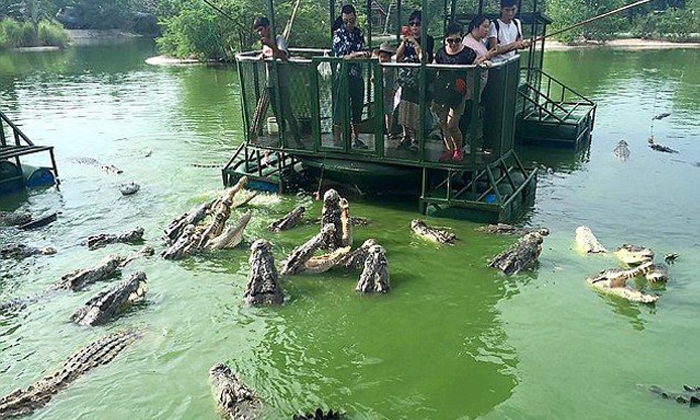 What were they thinking? Chinese tourists in Thailand feed swamp full of crocodiles from flimsy raft