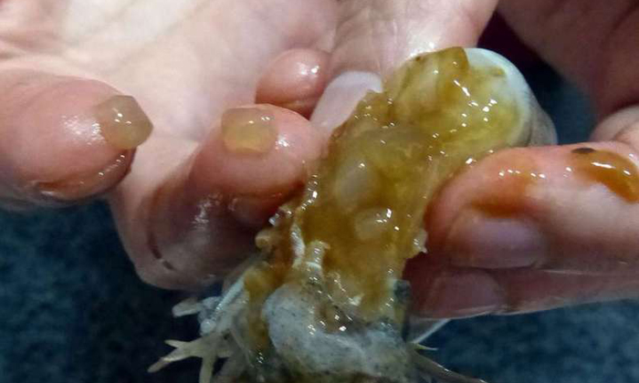 'Abnormal' prawns sold in Sengkang wet market, AVA probing if they are injected with gelatin